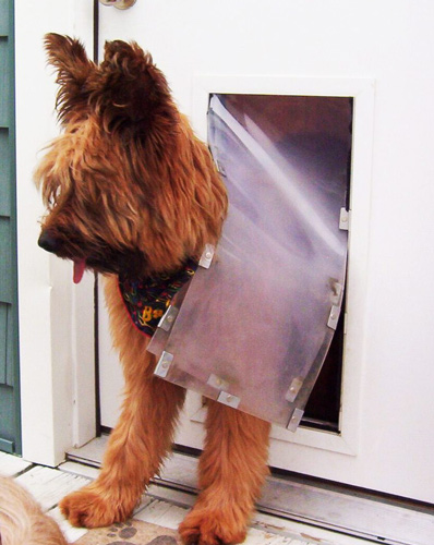 brown shaggy dog walking out of a hale pet door set in a white door